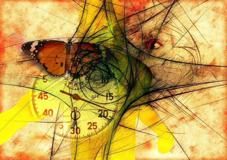 butterfly-744115_1920